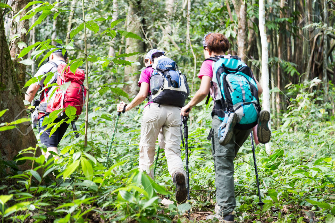 36054136-Group-of-people-hiking-in-a-tropical-forest-Stock-Photo